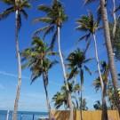 La Jolla Resort
