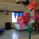 Kasa Kiwi Hostel & Travel Agency